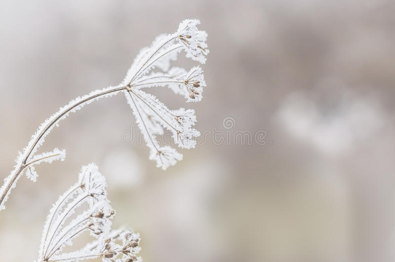 Vinterplats arkivfoto