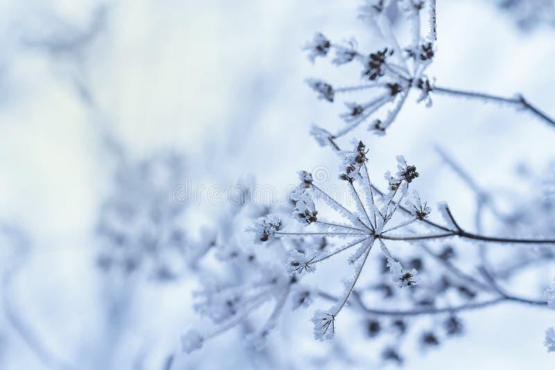Vinterplats fotografering för bildbyråer