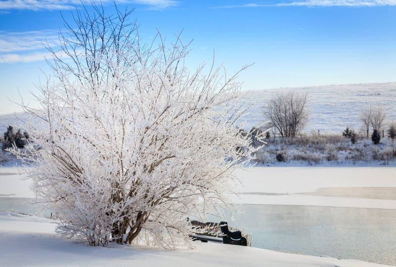 Vinterplats i centrala Kentucky arkivfoton