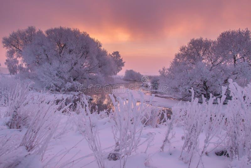 Vinterplats på soluppgång Rocky Mountains Covered vid sn? Frostiga träd på flodsida Förbluffa färgrik himmel på vintergryning Sce arkivfoton