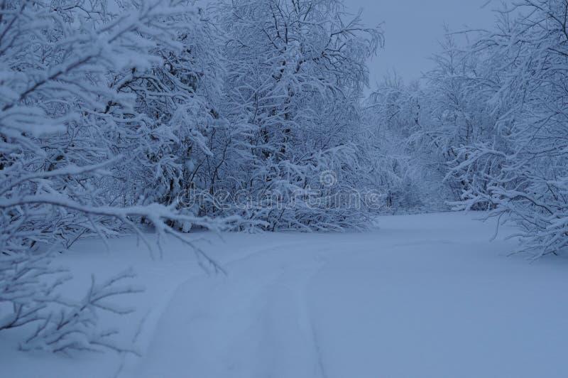 Vintersagaskog royaltyfri bild