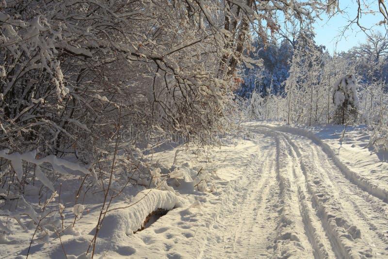 Vinterskog Royaltyfria Foton