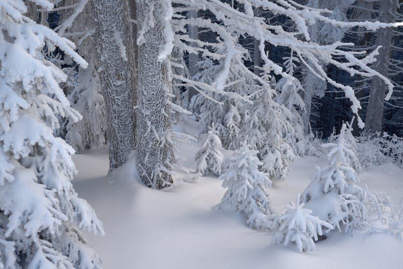 Vinterskog i snö royaltyfri bild