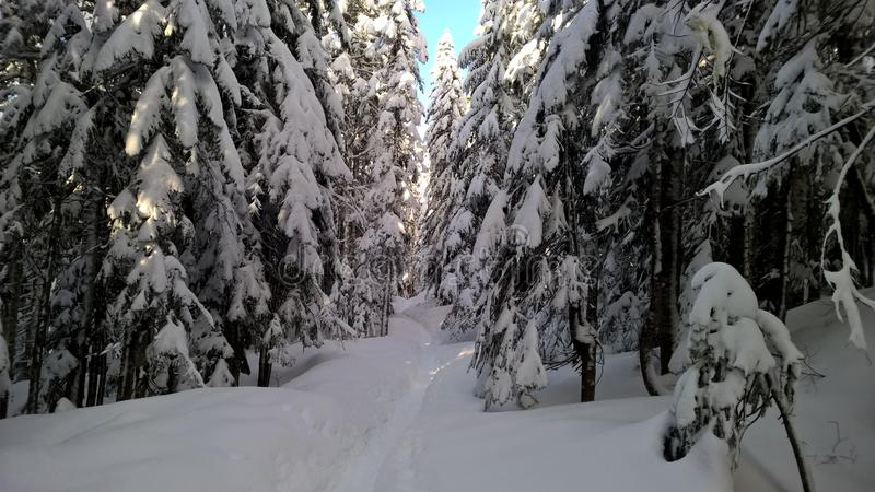 Vinterskog i Washington royaltyfri fotografi