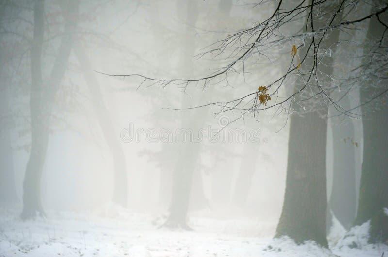 Vinterskog med dimma royaltyfri foto