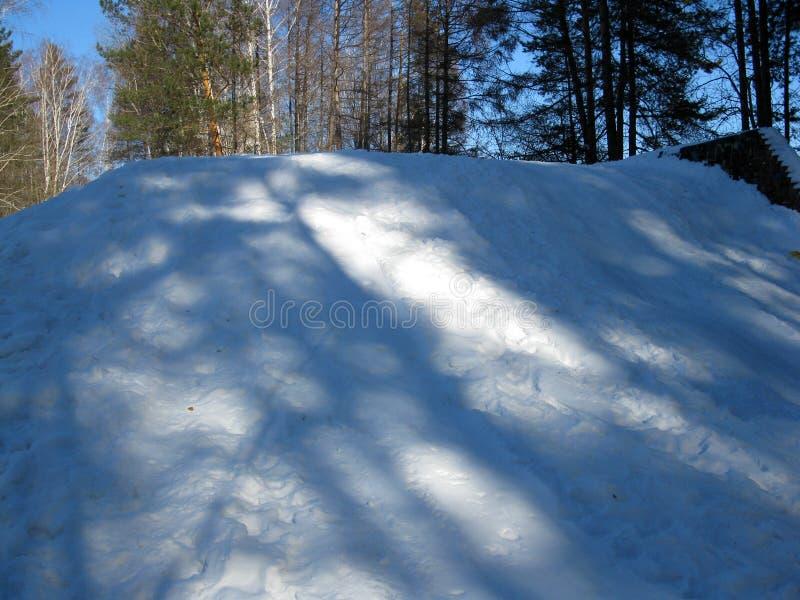 Vinterskog och snödrift royaltyfri foto