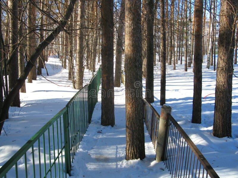 Vinterskog och staket arkivfoton
