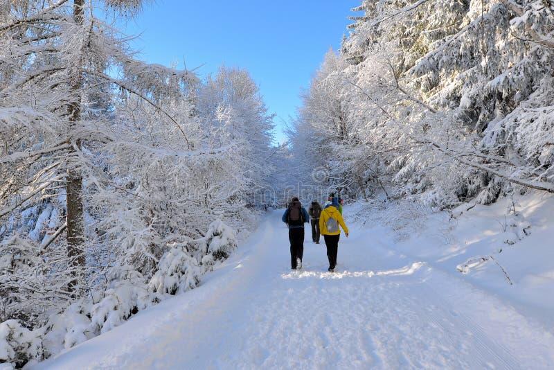 Vinterskog som fotvandrar royaltyfria bilder