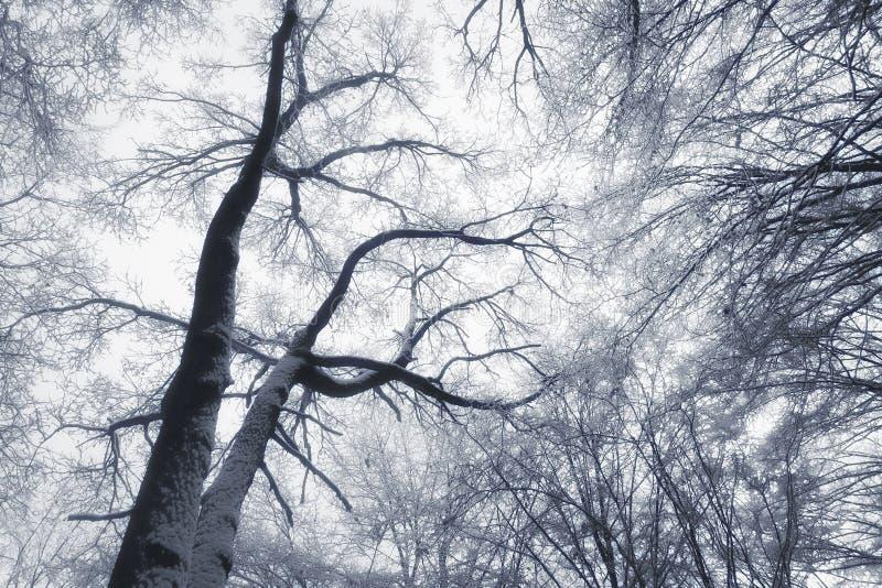 Vinterskogabstrakt begrepp fotografering för bildbyråer