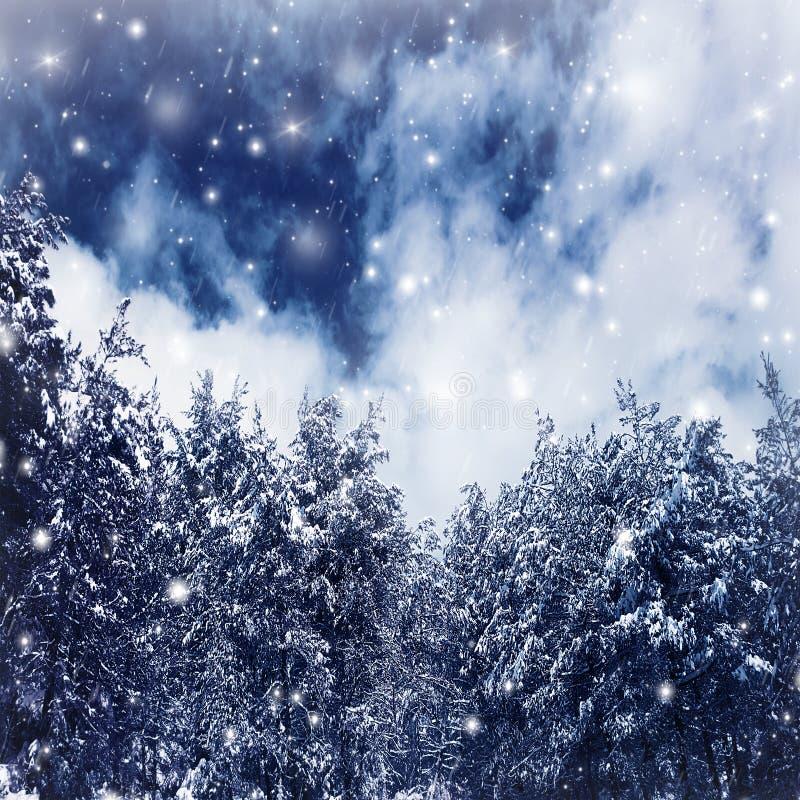 Vinterskogen gränsar royaltyfria foton