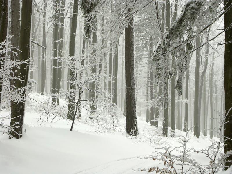 vinterskogen med frost räknade trees arkivbilder