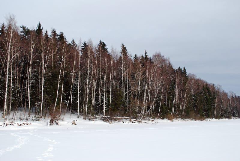 Vinterskogen på annan kust av den djupfrysta floden, i den molniga kalla eftermiddagen Olik natur av Ryssland royaltyfri foto