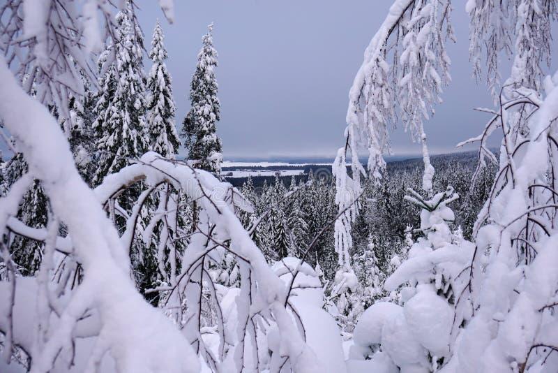 Vinterskogen till och med detäckte filialerna skidar på semesterorten Vuokatti royaltyfri foto
