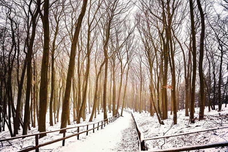 Vinterskoglandskap med den dolda banan för snö fotografering för bildbyråer
