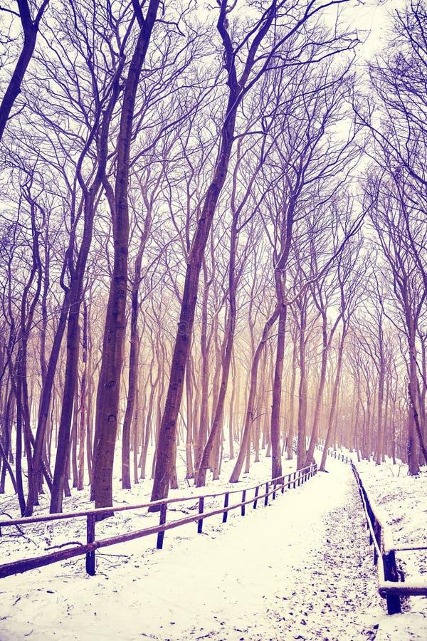 Vinterskoglandskap med den dolda banan för snö royaltyfria bilder