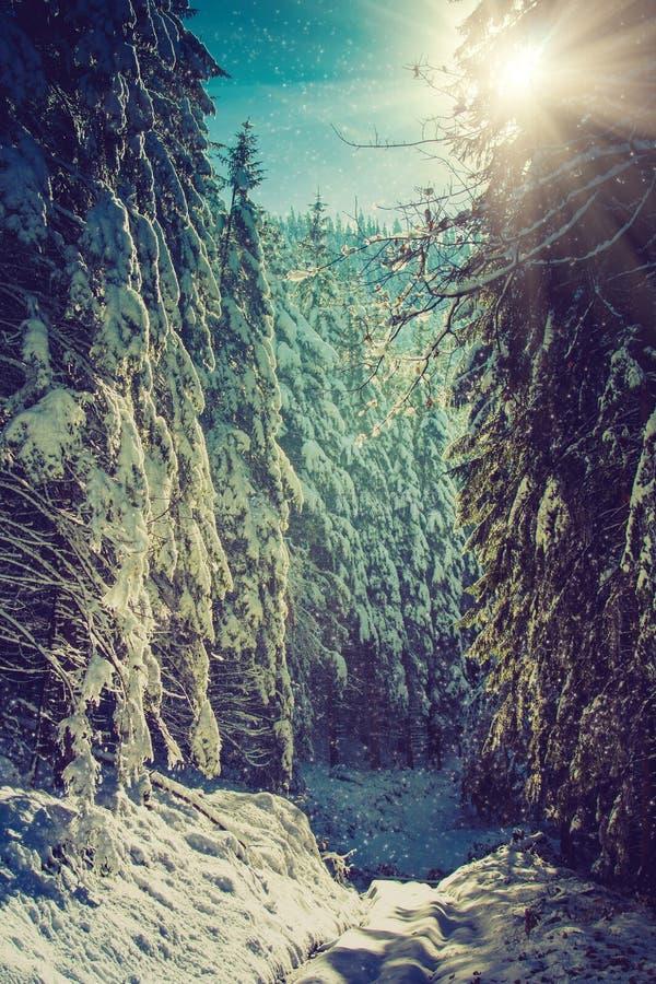 Vinterskoglandskapet av höjdpunkten sörjer dolt med snö på morgonsolljus royaltyfri foto
