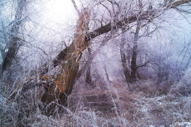 Vinterskogplats royaltyfri foto