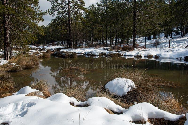 Vinterskogslandskap med berg täckt av snö och reflektioner på sjön royaltyfri bild