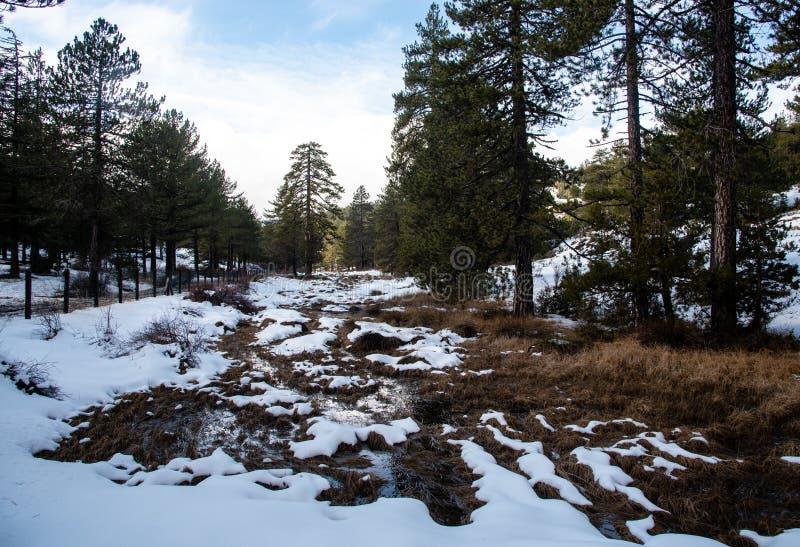 Vinterskogslandskap med berg täckt av snö- och tallträd arkivfoto