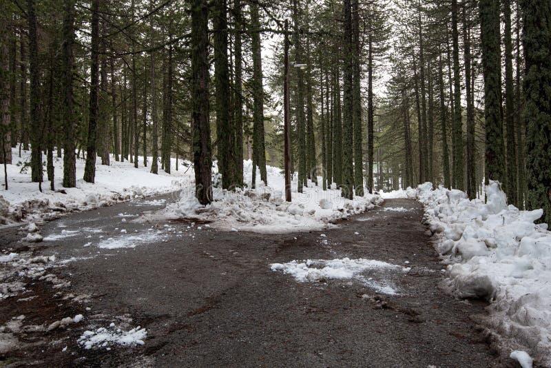 Vinterskogslandskap med frusen väg arkivfoto