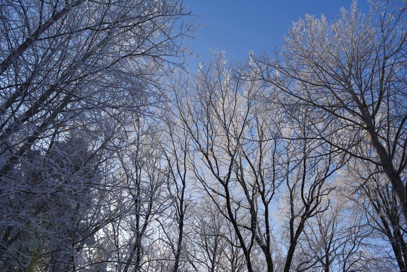 Vinterskogträd som täckas med rimfrost i kall solig dag royaltyfria bilder