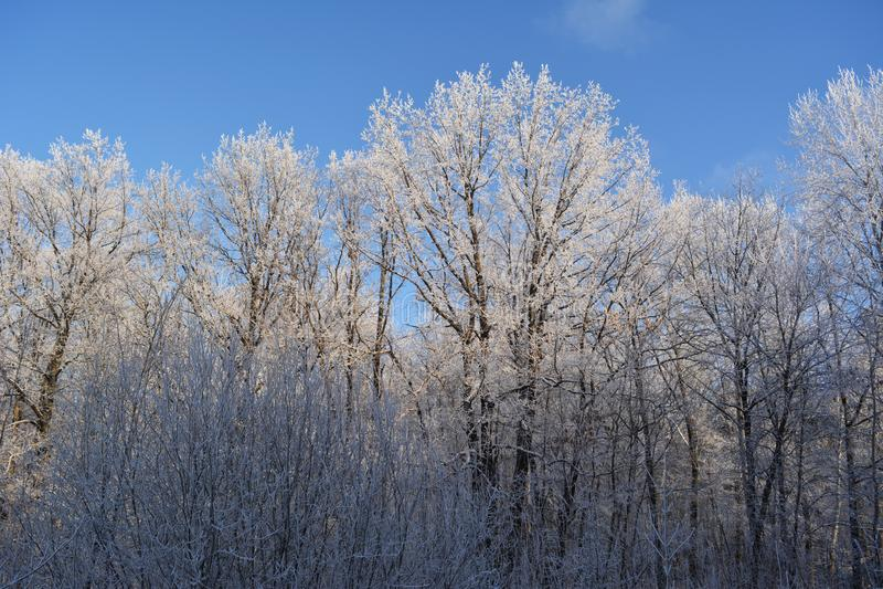 Vinterskogträd som täckas med rimfrost mot blå himmel bakgrundsjulen inramninde ferieplats arkivbild