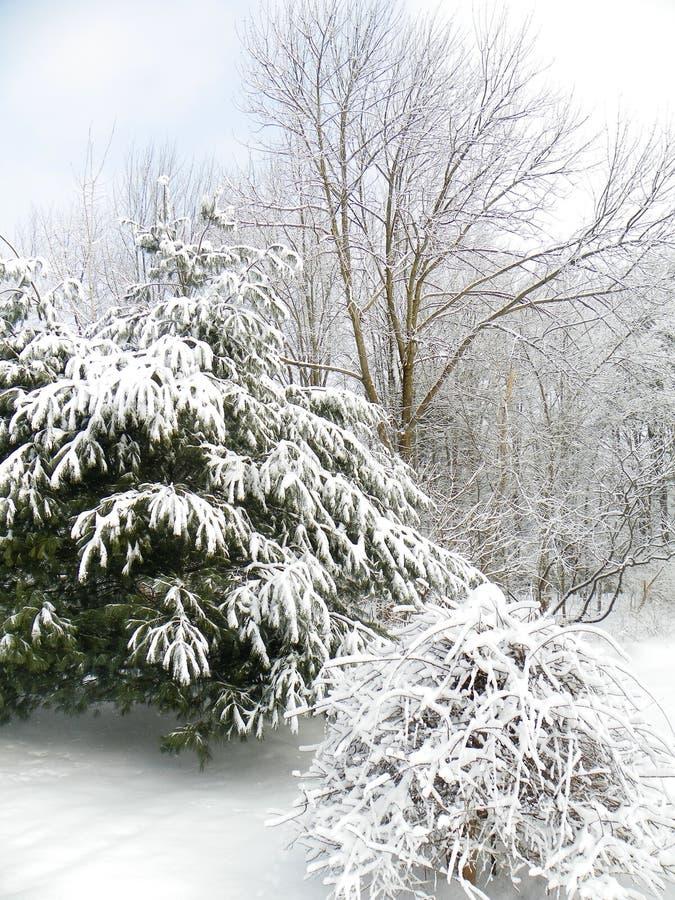 Vintersnöfiltar sörjer lövruskor royaltyfri fotografi