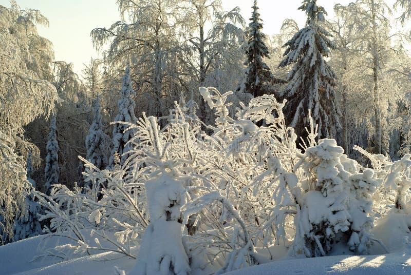 Vintersnöskog i frostigt väder arkivfoto