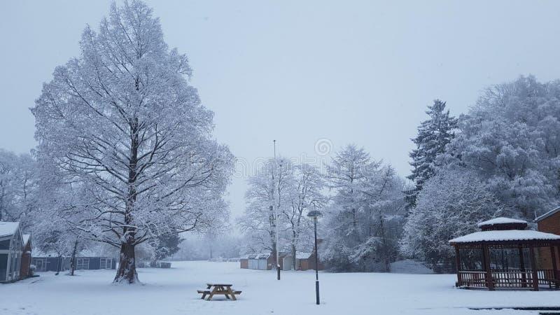 Vintersnöträd Frostigt vinterlandskap i snöig skogträd som täckas med snö royaltyfria foton