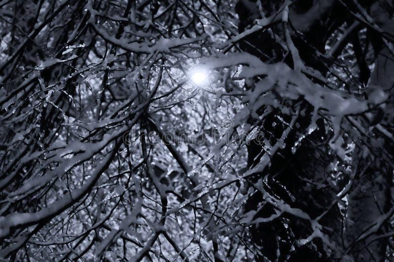 Vintersol i svartvitt royaltyfria foton