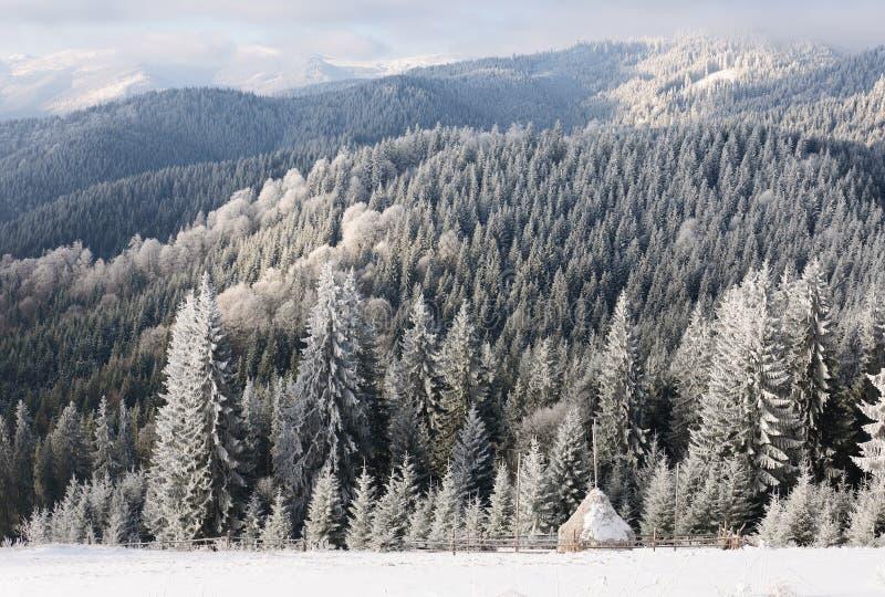 Vintersollandskap i en bergskog arkivbild