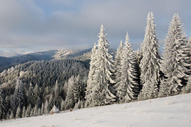 Vintersollandskap i en bergskog fotografering för bildbyråer