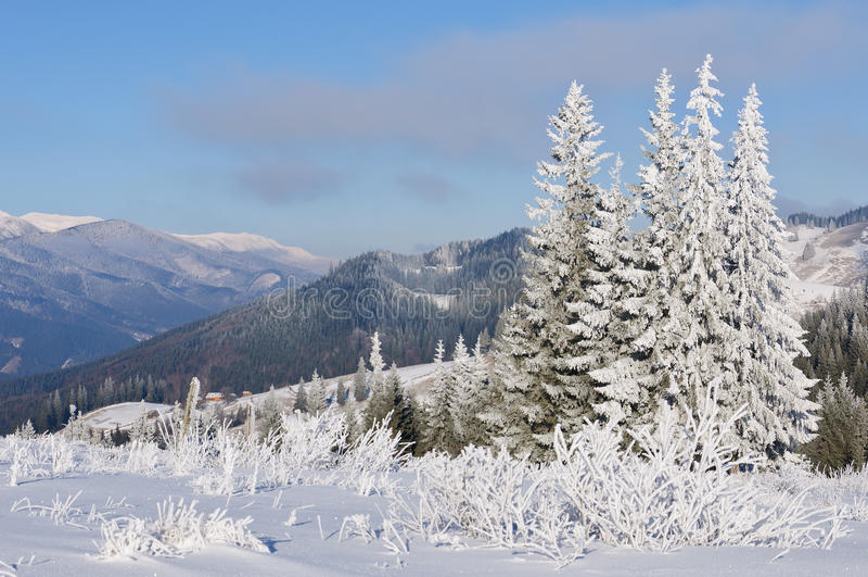 Vintersollandskap i en bergskog arkivfoto