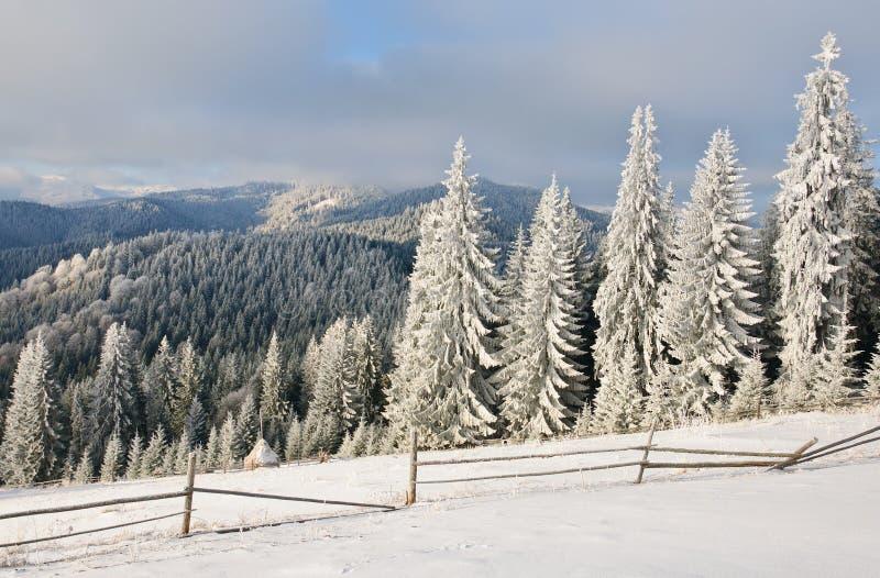 Vintersollandskap i en bergskog arkivfoton