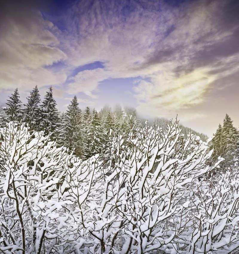 Vintersolnedgång royaltyfri bild