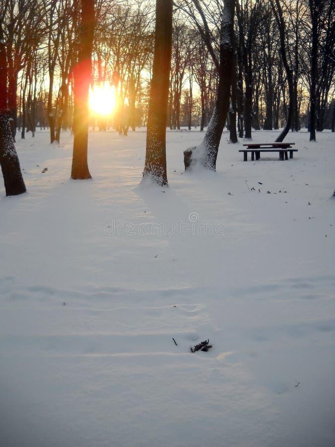 Vintersolnedgång i skog och reflexion av ljus över snö- och eksidor arkivbilder