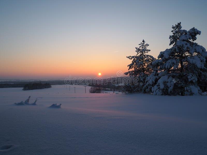 Vintersolnedgången som in skiner, sörjer trän royaltyfria bilder