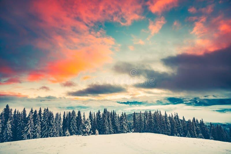 Vintersolnedgånglandskapet med sörjer trädskogen royaltyfri bild