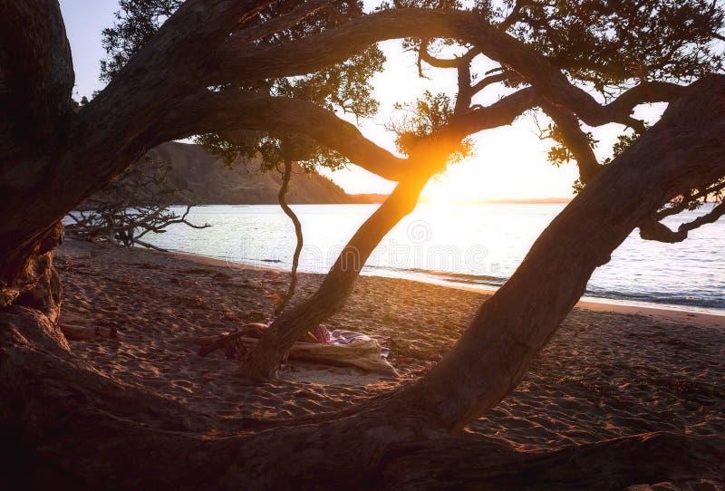 Vintersolnedgångstrand Nya Zeeland fotografering för bildbyråer