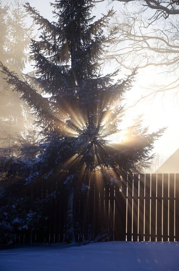 Vintersoluppgång i by och dimma royaltyfria bilder