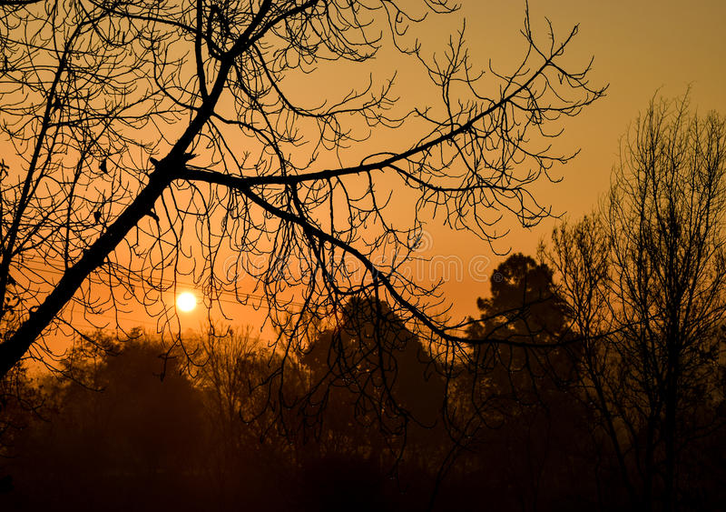 Vintersoluppgång under vinterträd arkivfoto