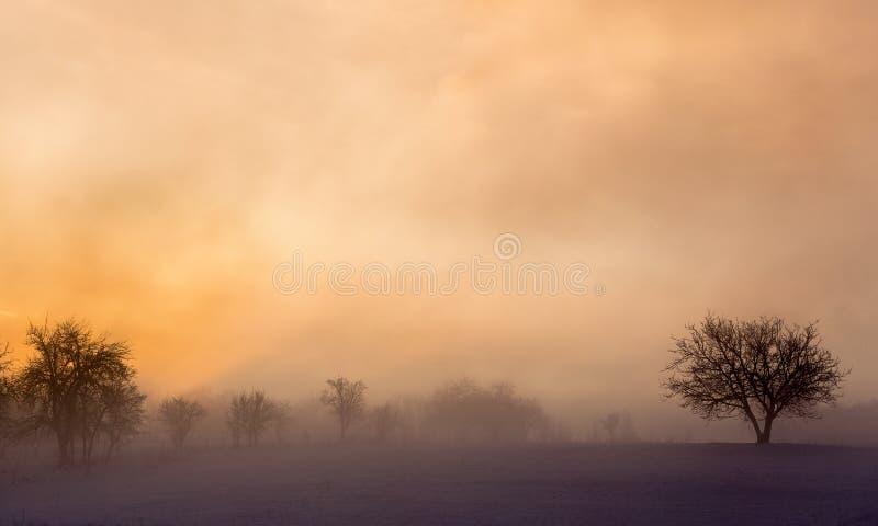 Vintersoluppgånglandskap med dimma och trädet royaltyfri fotografi