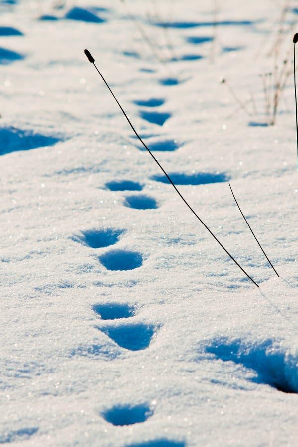 Download Vinterspår arkivfoto. Bild av liggande, traditionellt - 27280232