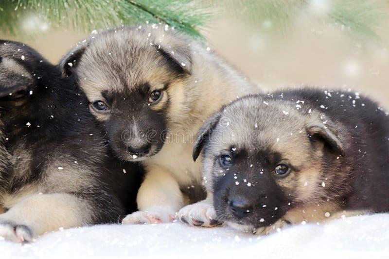 Vinterstående av ett husdjur arkivbilder