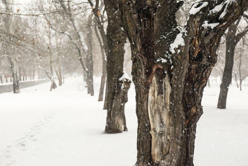 Vinterstaden parkerar med träd royaltyfri bild