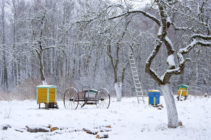 Vintertid i gammal lantlig trädgård fotografering för bildbyråer