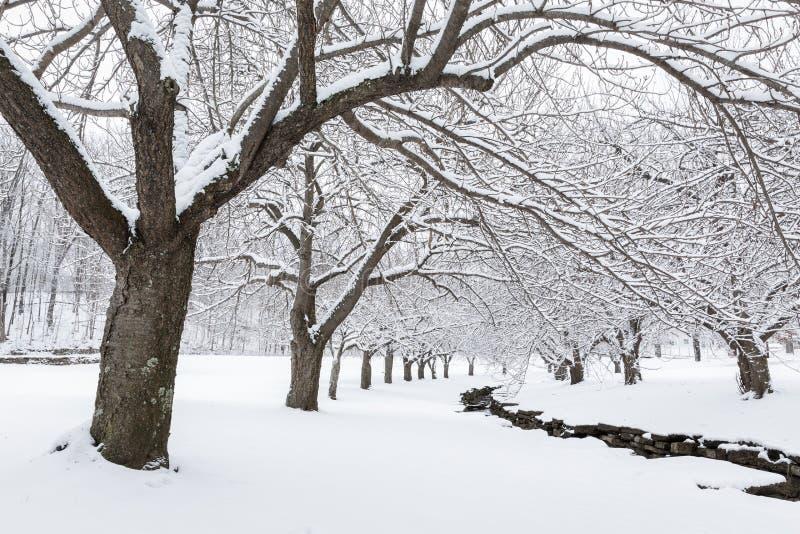 Vintertid i Hurd Park, Dover, NJ arkivfoton
