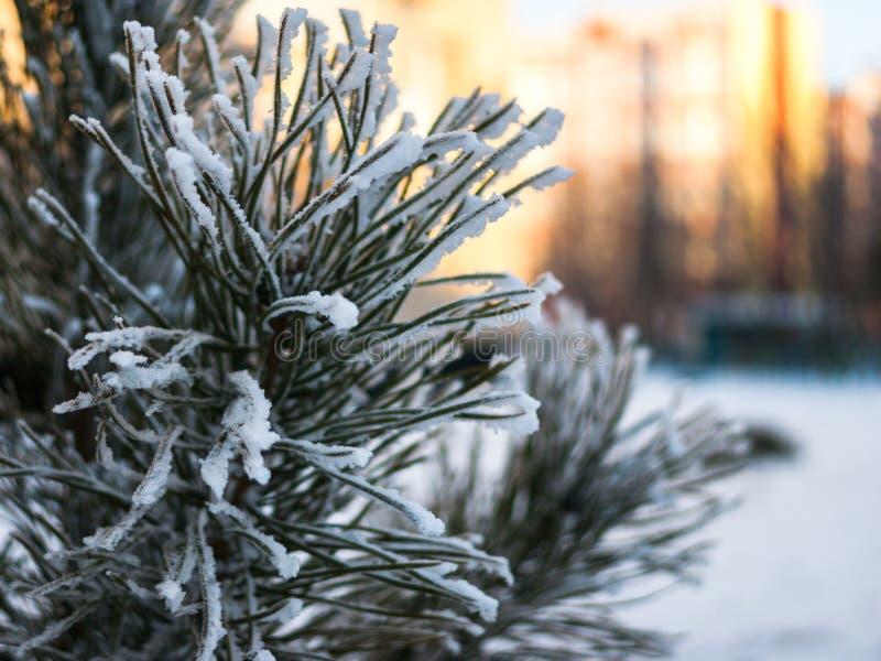 Vintertidsäsongen specificerar begrepp: frostat sörja filialen på en solig bakgrund för suddig cityscape med kopieringsutrymme fotografering för bildbyråer