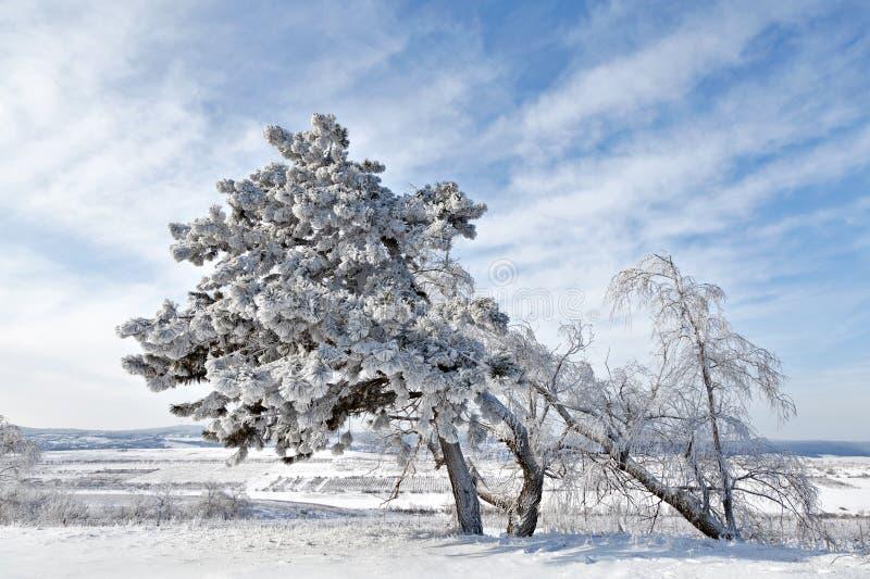 Download Vinterträ arkivfoto. Bild av skog, utomhus, vitt, tree - 27275572