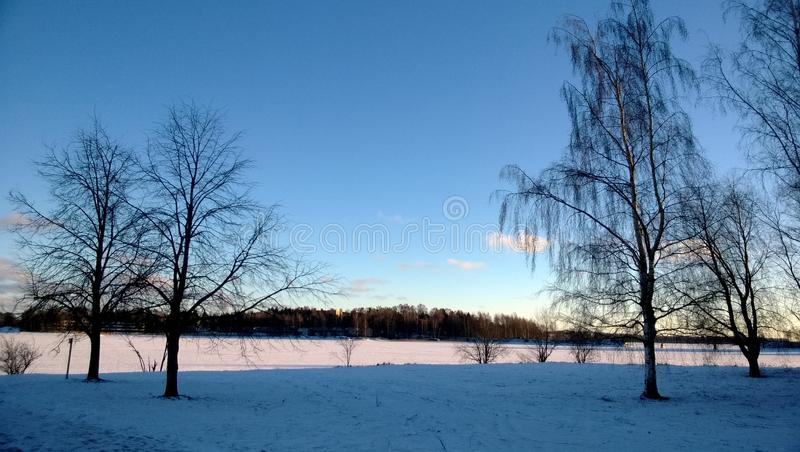 Vinterträd i Otaniemi Espoo, Finland Januari 2014 arkivfoton